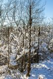 Winter nature under the first snow on a sunny day. Royalty Free Stock Photos