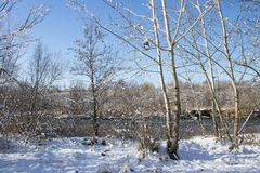 Winter nature under the first snow on a sunny day. Stock Photos