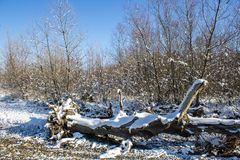 Winter nature under the first snow on a sunny day. Stock Photography
