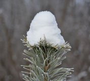 Winter - nature wonder Stock Photography
