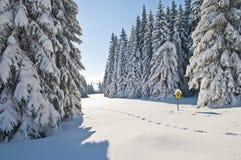 Winter Naturschutzgebiet Stockbild