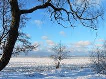 Winter near lake, Lithuania Royalty Free Stock Image