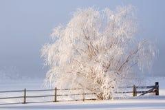 Winter-Nebel Lizenzfreies Stockbild