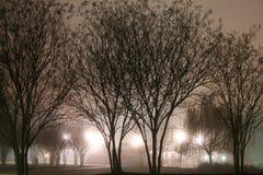 Winter-Nebel im Park Stockbilder