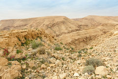 Winter Negev desert Royalty Free Stock Images