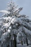 Winter, neues Jahr Lizenzfreies Stockbild