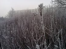 Winter on New Years Day royalty free stock image