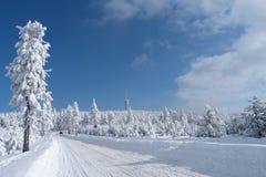 Winter, new year royalty free stock photo