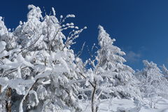 Winter, new year Stock Image