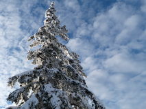 Winter, new year Stock Photography