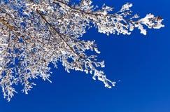 Winter-Niederlassung Stockbilder