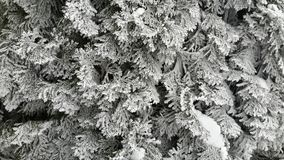 Winter-Niederlassung Lizenzfreie Stockfotografie