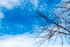 Winter-Niederlassungen und ein blauer Himmel Stockbild