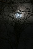 Winter night. Forest and moon Stock Photography