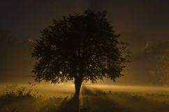 Foggy Winter night with street lamp behind the tree Royalty Free Stock Images