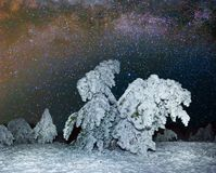 Winter night forest scene Royalty Free Stock Image