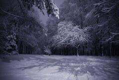 Winter night landscape Stock Image