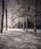 Winter night landscape Stock Image