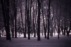 Winter night landscape Royalty Free Stock Image