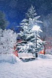 Winter night landscape - bench in the night park covered with snow among frosty winter trees and street lights Royalty Free Stock Photography