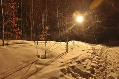 Winter night landscape with forest with yellow leaves, covered with soft snow and light-colored beams. Road, cloudy sky, moon halo royalty free stock images
