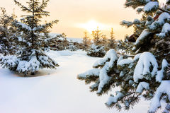 Winter night landscape Royalty Free Stock Photo