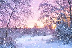 Winter night landscape with sunset in forest. Beautiful winter landscape with forest, trees and sunrise. winterly morning of a new day. purple winter landscape Stock Photography