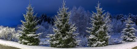 Winter night panoramic landscape. Christmas trees covered with snow. Fairy-tale snow and festive mood. Panorama. Winter night panoramic landscape. Christmas Stock Photo