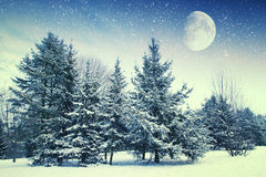 Winter night in the park. Stock Photo