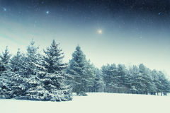 Winter night in the park. Elements of this image furnished by NASA Stock Images