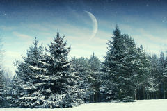 Winter night in the park. Elements of this image furnished by NASA Stock Image