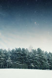 Winter night in the park. Royalty Free Stock Photo