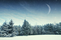 Winter night in the park. Royalty Free Stock Images