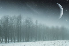 Winter night in the park. Stock Photos