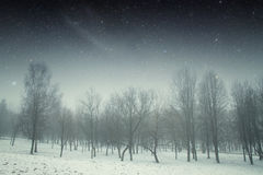 Winter night in the park. Stock Photography