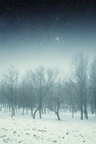 Winter night in the park. Royalty Free Stock Image