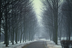 Winter night in the park. Royalty Free Stock Photography