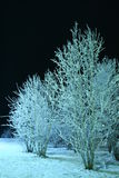 Winter night scene Royalty Free Stock Photography