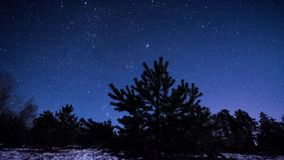 Winter night scenery timelapse. Pine trees and stars stock video footage