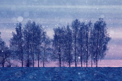 Winter night snowfall trees Royalty Free Stock Image
