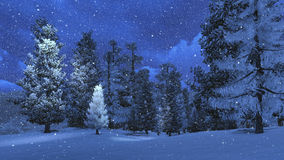 Winter night in the snowy pinewood Stock Photo