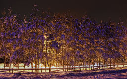 Winter night view landscape. Poiana Brasov royalty free stock images