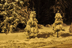 Winter night view landscape. Poiana Brasov stock photos