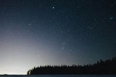 Winter night in the woods Royalty Free Stock Photography