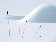 Winter-noch Leben Stockfotografie