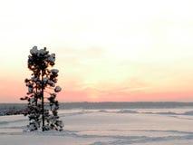 Winter Nochlebensdauer Stockfotografie