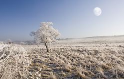 Winter Northern Fields. Taken in Northumberland, England with Frost in Fields and a lone Tree with the Moon in bright Blue Sky Royalty Free Stock Photo