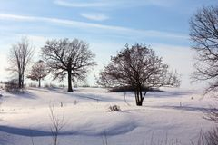 Winter in Northern Wisconsin. Trees in the sparkling snow on a country road in Polk County Wisconsin Royalty Free Stock Images