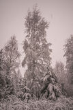 Winter in Norwegian forests Stock Images