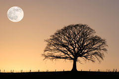 Free Winter Oak And Full Moon Royalty Free Stock Image - 6512026